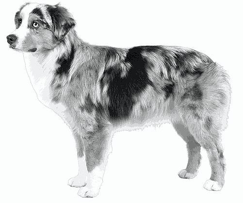 black and white illustration of a good breed representation